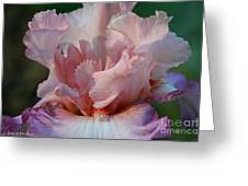 Ruffled Coral Greeting Card