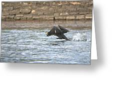 Cormorant Water Takeoff Greeting Card