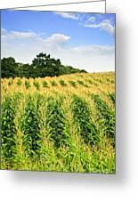 Corn Field Greeting Card by Elena Elisseeva