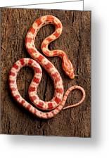 Corn Snake P. Guttatus On Tree Bark Greeting Card