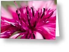 Corny Flower Greeting Card