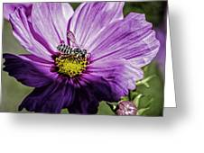 Cosmos Flower And Bee Greeting Card