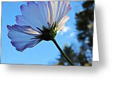 Cosmos To The Sky Greeting Card