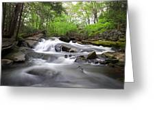 Cotton Hollow Greeting Card