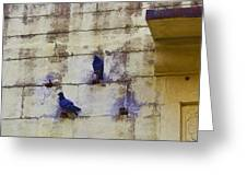 Couple Of Pigeons On A Wall Greeting Card