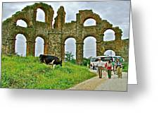 Cow By Second Century Aspendos Aqueduct-turkey Greeting Card