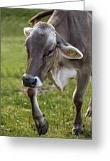 Cow In Heiterwang Greeting Card
