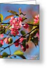 Crab Apple Greeting Card