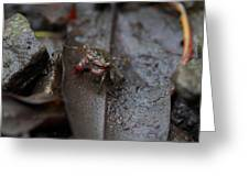 Crab In Mangrove Forest In Los Haitises National Park Dominican Republic Greeting Card
