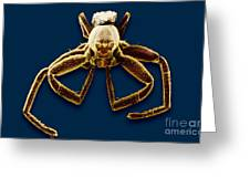 Crab Spider Greeting Card