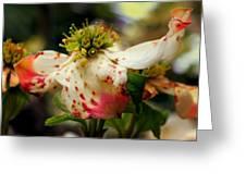 Cranberry Dogwoods Greeting Card