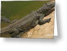 crocodile of the Nile Greeting Card