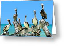 Crowd Of Brown Pelicans Perched On An Old Peer Greeting Card