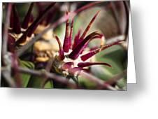 Crown Of Thorns Greeting Card by Kelley King