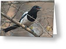 Crying Magpie Greeting Card