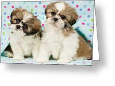 Curious Twins Greeting Card by Greg Cuddiford