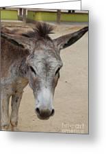 Cute Donkey Greeting Card