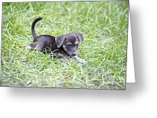 Cute Puppy In The Grass Greeting Card by Jannis Werner