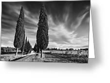 Cypress Trees- Tuscany Greeting Card