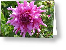 Dahlia Named Annette C Greeting Card