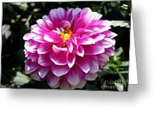 Dahlia Named Brian Ray Greeting Card