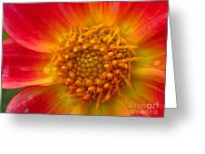 Dahlia Named Brian's Sun Greeting Card