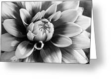 Dahlia Named Mystery Day Greeting Card