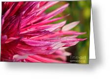 Dahlia Named Normandy Wild Willie Greeting Card