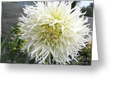 Dahlia Named Tsuki Yori No Shisa Greeting Card