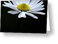 Daisy 1 Greeting Card