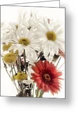 Daisy Greeting Card
