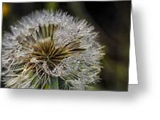 Dandelion With Water Drops Greeting Card