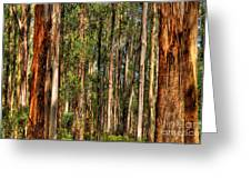 Dandenong Forest Greeting Card