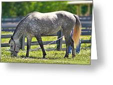 Dapple Grey Horse Greeting Card