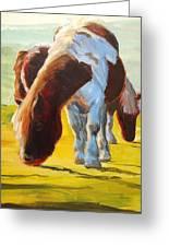 Dartmoor Ponies Painting Greeting Card