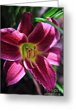 Day Lily 2 Greeting Card