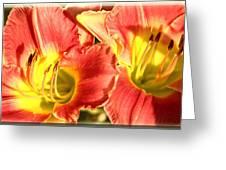 Daylily Greeting Card