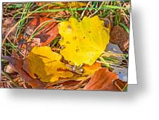 Dead Poplar Leaves Greeting Card