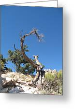 Dead Tree At Grand Canyon Greeting Card
