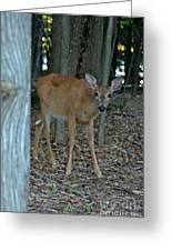 Deer 1 Greeting Card