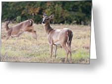 Deer At Paynes Prairie Greeting Card