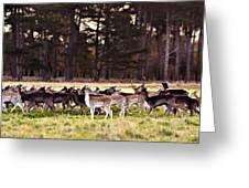 Deer In The Phoenix Park - Dublin Greeting Card by Barry O Carroll