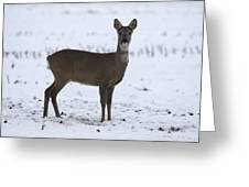 Deer In The Snow Netherlands Greeting Card
