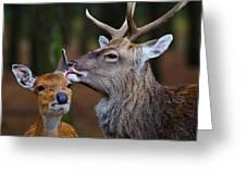 Deer Love Greeting Card