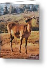 Deer On Mountain  Greeting Card