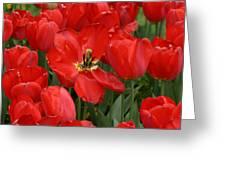 Descanso Gardens 6 Greeting Card