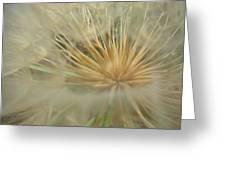 Desert Dandelion 6 Greeting Card