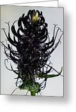 Devils Claw Flower Greeting Card