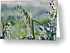 Dew Drops On Grass Greeting Card