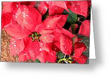 Diamond Encrusted Poinsettias Greeting Card